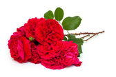 Bunch of beautiful red roses — Stock Photo