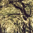Trees in downtown of Savannah — Foto Stock
