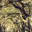 Trees in downtown of Savannah - Stock Photo