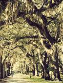 Trees in downtown of Savannah — Stock Photo