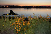 Arrow Island on Mississippi — Stock Photo