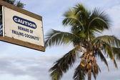 Beware of falling coconuts — Stock Photo