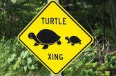 Turtle xing — Stockfoto