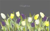 Frontera de flores de tulipán. tarjeta de felicitación con tulipanes. colorido fresco — Vector de stock