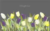 Tulp bloemen grens. wenskaart met tulpen. kleurrijke vers — Stockvector