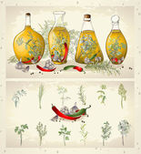 Illustration of spices, spicy herbs, olive oil. — Stok Vektör