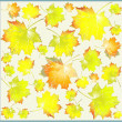 Illustration of leaves of a maple. Autumnal background. — Stock Vector