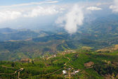 Landscape of tea plantations in Haputale, Sri Lanka — Stock Photo