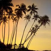 Palms ans sea — Stockfoto