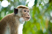 Monkey close-up — Stock Photo