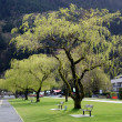 Willows and benches at Harrison lake park — Stock Photo #24400159