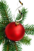 Christmas bauble and pine branches background — Stock Photo