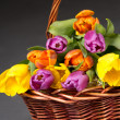 Royalty-Free Stock Photo: Brown basket with tulip flowers over grey