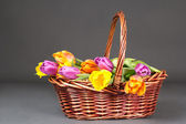 Brown basket with colorful tulips over grey — Stock Photo