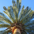 Big palm branches over blue sky — Stock Photo