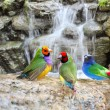 Exotic Birds Enjoying the Water — Stock Photo