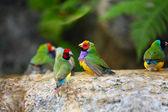 Exotic Birds Enjoying the Water — Stock Photo