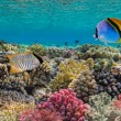 Threadfin butterflyfish (Chaetodon auriga), Red Sea, Egypt — Stock Photo