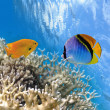 Tropical Fish on Coral Reef in the Red Sea — Stock Photo #32578171
