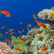Underwater shoot of vivid coral reef with a fishes, Red Sea, Egy — Stock Photo #32578293