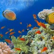 Underwater shoot of vivid coral reef with a fishes, Red Sea, Egy — Stock Photo