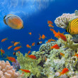 Underwater shoot of vivid coral reef with a fishes, Red Sea, Egy — Stock Photo #32578705