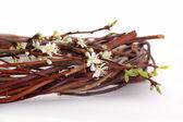 Plum's flower — Stock Photo