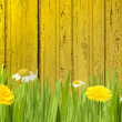 Stock Photo: Green grass with flowers