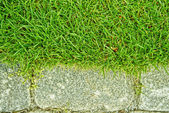Grass and stone — Stock Photo