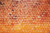 Peine de la miel como telón de fondo — Foto de Stock