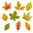 Set of leaves — Stock Vector