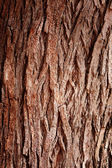 Bark Tree — Stock Photo