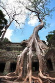 Ta prohm — Photo