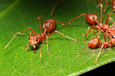 Ant group — Stock Photo