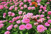 Fiore colorato — Foto Stock