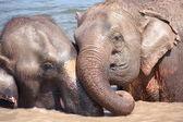 Elephant relationship — 图库照片