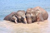 象の関係 — ストック写真