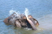 Elephant plays water — Stock Photo