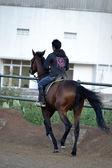 Young boy riding horse — Stock Photo