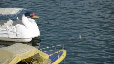 Swan pedal boat — Video Stock
