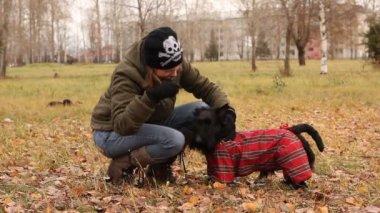 Scottish terrier in the park — Stock Video