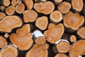 Firewood logs — Foto Stock
