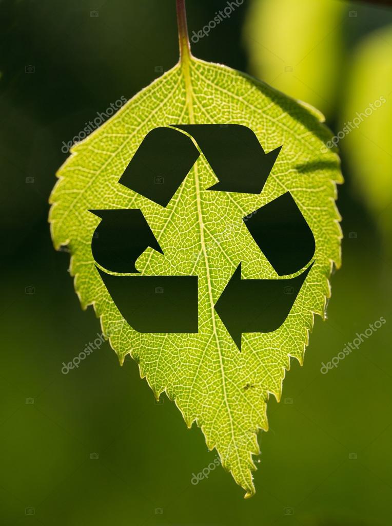 背景 壁纸 花 绿色 绿叶 树叶 植物 桌面 764_1024 竖版 竖屏 手机