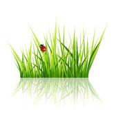 白い背景で隔離のテントウムシとベクトル草 — ストックベクタ