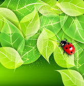 Vector background with leaves and ladybug — Stok Vektör