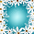 Congratulation vector background with daisies — Stock Vector #19078833
