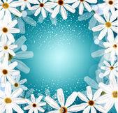 Congratulation vector background with daisies — Stock Vector