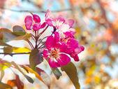 Fundo de primavera — Foto Stock