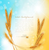 Vector background with gold ears of wheat and sun rays — Stock Vector