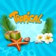 vektorové tropické banner s mušlemi, hvězdice — Stock vektor